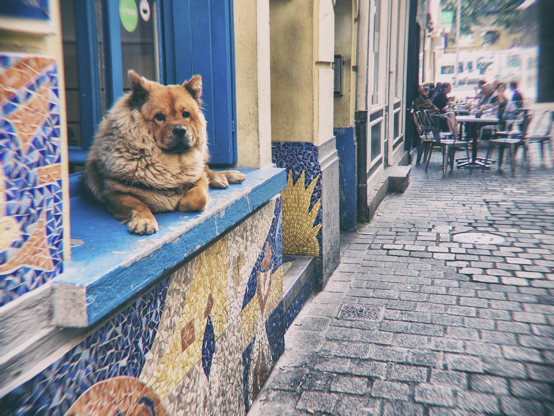 chien sur un rebord de fenêtre