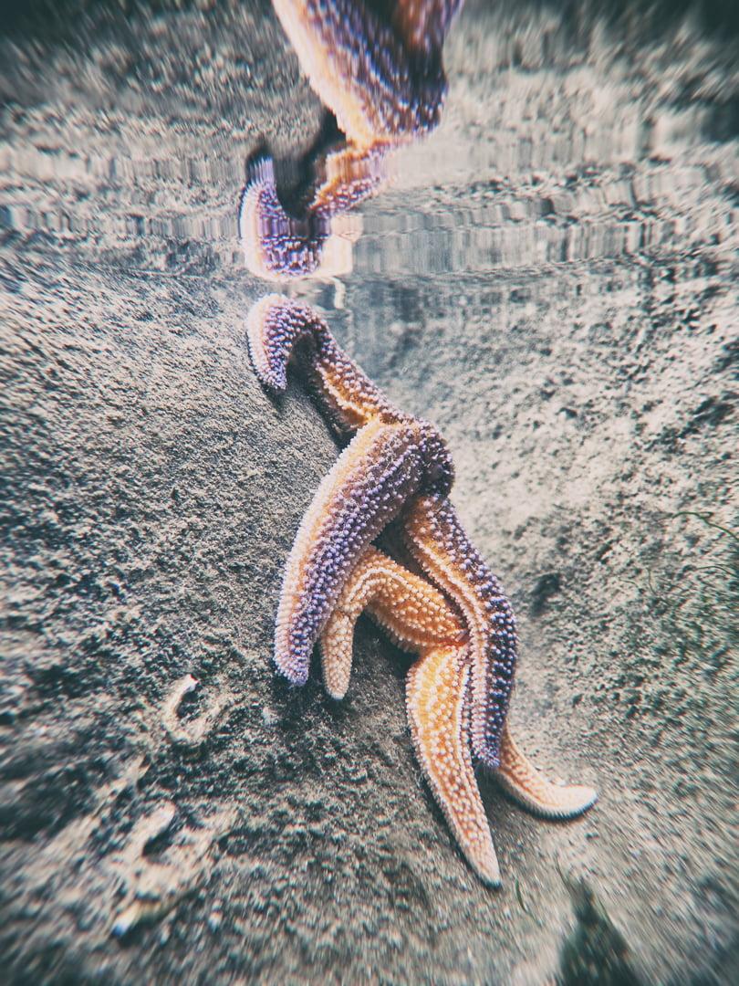 étoiles de mer sous l'eau
