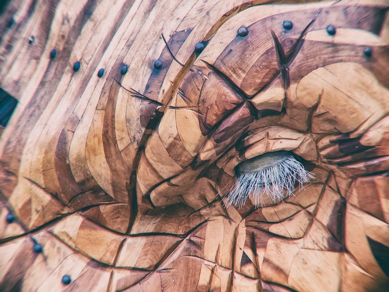gros plan sur l'oeil de l'éléphant