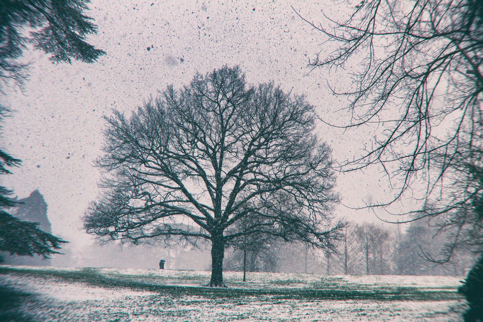 arbre sous de gros flocons de neige